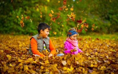 Őszi szünet: 2020. október 23-tól november 1-ig